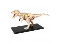 T-rex Anatomie Model