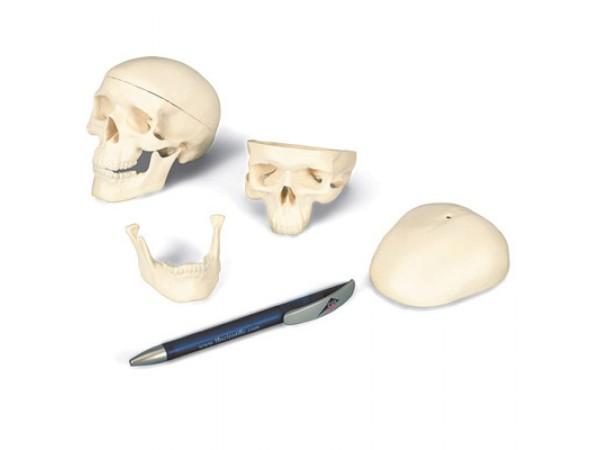 Mini schedel