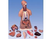Torsomodellen: Classic unisex torso, 16-delig rompmodel