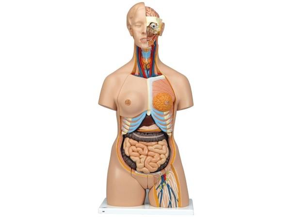 Torsomodellen: Deluxe man/vrouw torso, 24 delig rompmodel