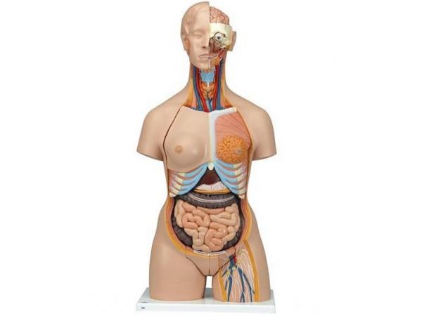 Torsomodellen: Deluxe man/vrouw torso met open gewerkte rug