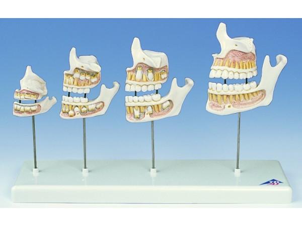 Dentale ontwikkeling