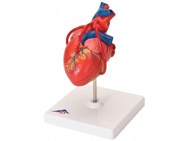 Klassiek hart met Bypass, 2 delig