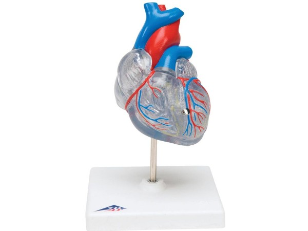 Klassiek hart met geleidingsysteem, 2-delig