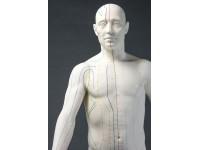 Acupunctuur Man deluxe