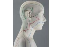 Acupunctuur Vrouw, deluxe