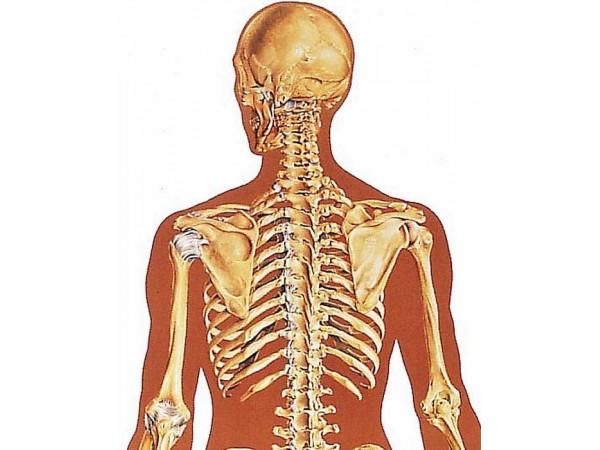 Wandplaat Skelet (achterzijde)
