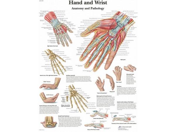 Hand & Pols, papieren wandplaat