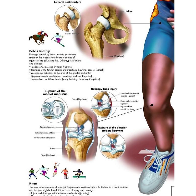 Fantastisch Körperebene Und Anatomische Richtungen Arbeitsblatt ...