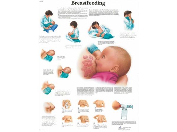 Borstvoeding, papieren wandplaat