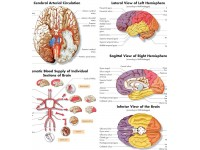 De Hersenen, gelamineerde wandplaat