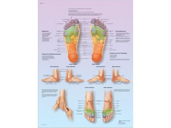 Voetreflex zone Massage, gelamineerde wandplaat