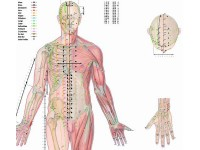 Body Acupuncture, gelamineerde wandplaat