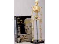 40cm Skelet
