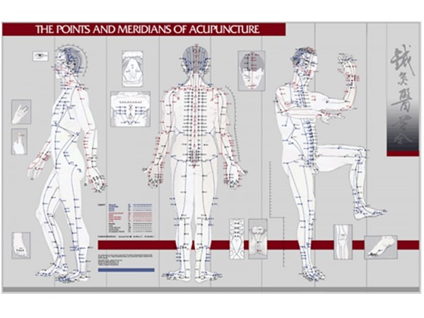 Points & Meridians of Acupuncture, wandplaat