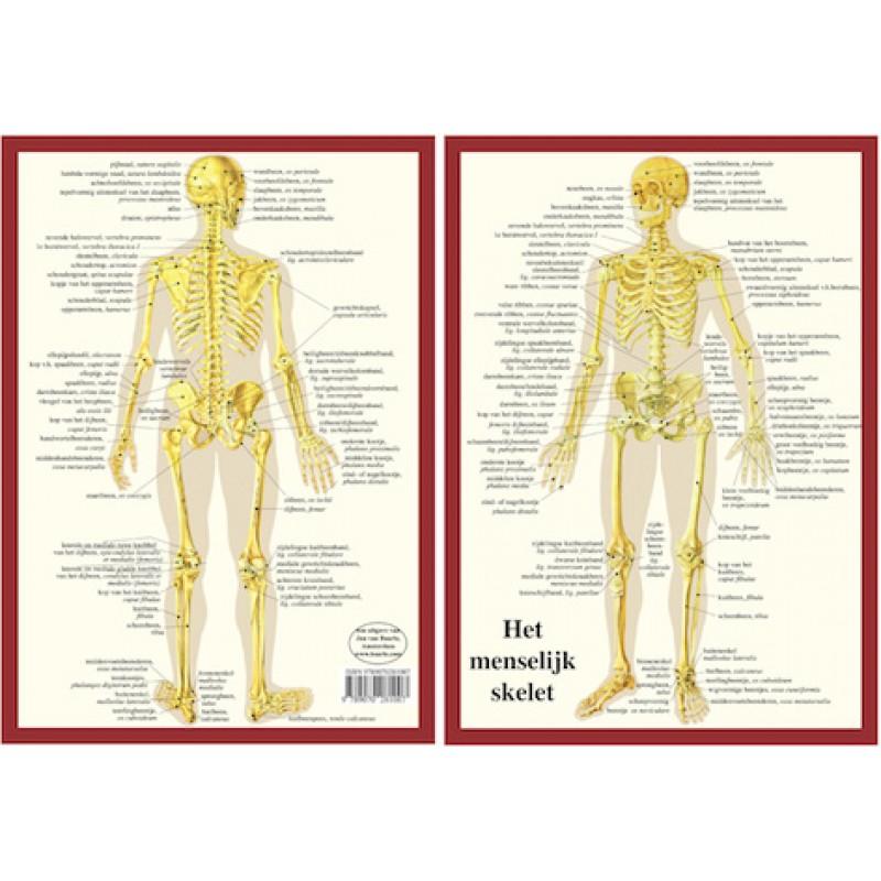 Anatomie Kaart Skelet Nederlands