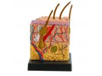 Huid model Ein-O Science