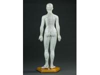 Acupunctuurmodel vrouw, 48 cm.