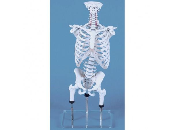 Flex wervelkolom, ribbenkast, heup positioneerbaar
