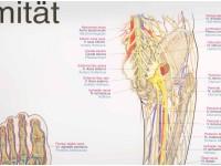 Wandplaat Obere Extremität-Upper Limb
