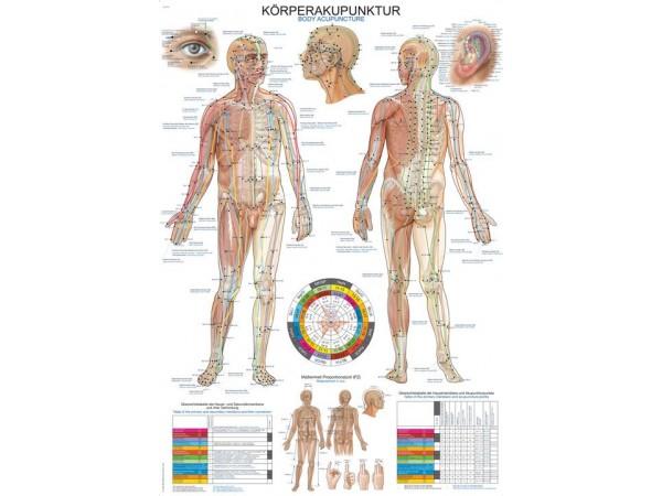 Body Acupuncture, wandplaat 70x100cm