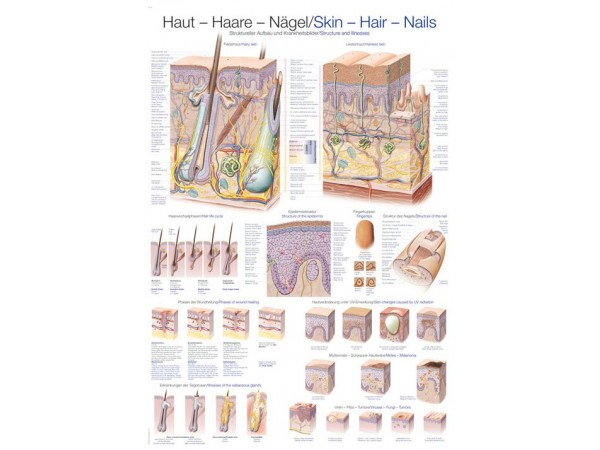 "Wandplaat ""Skin-Hair-Nails"", 70x100cm"