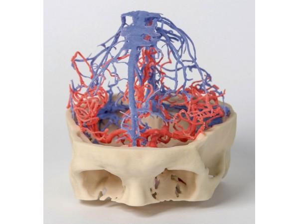 Craniale arteriële & veneuze circulatie, 3Dprint