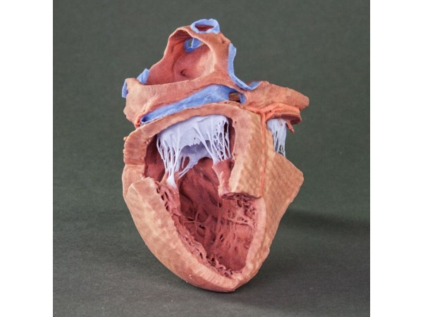 Hartreplica, 3D print, vergroot