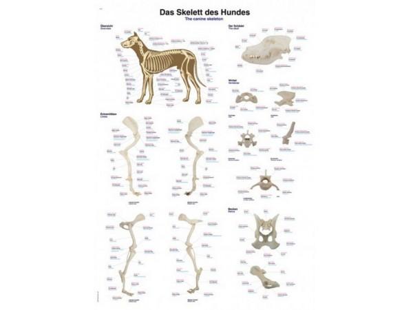 Skelet Hond, kunststof wandplaat