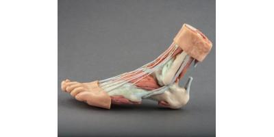 Anatomisch voetmodel, 3D print