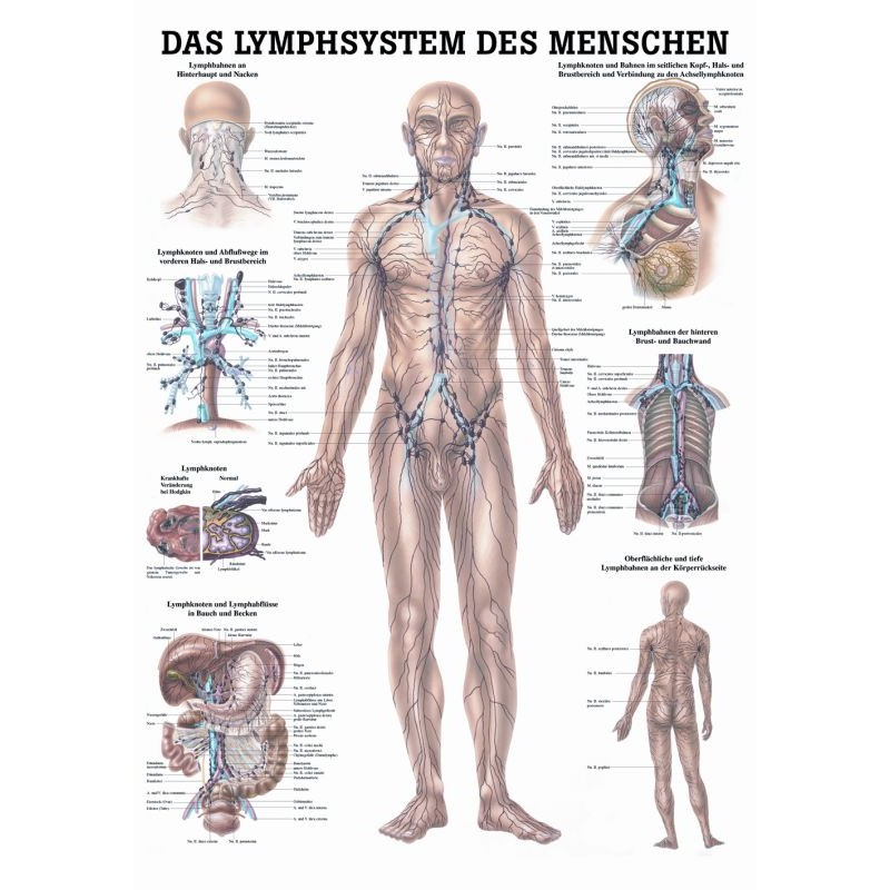 Erfreut Lymphsystem Anatomie Galerie - Anatomie Ideen - finotti.info
