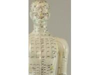 Acupunctuurmodel 60 cm.