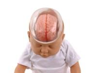 Shaken Baby Demonstratie Model