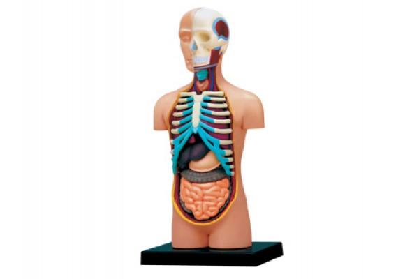 Anatomie 4D Puzzels