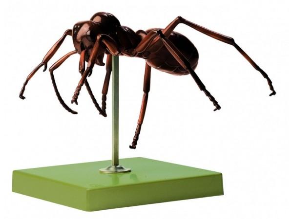 Anatomisch Model Rode Bosmier