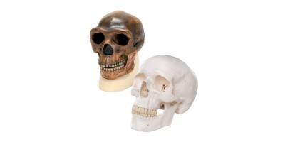 Antropologie Vergelijkingsset