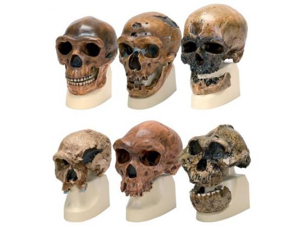 Antropologie Modellen Set