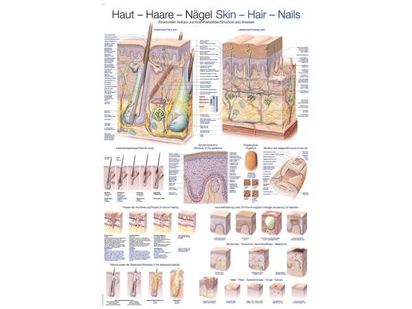 "Wandplaat ""Skin-Hair-Nails"", 70x100cm"