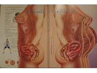 Zwangerschap Platen Boek, 46x61cm