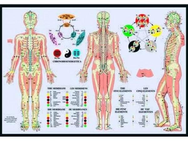 Meridianen Poster en de Vijf elementen
