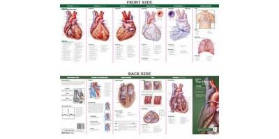 Anatomie van het Hart Studiegids
