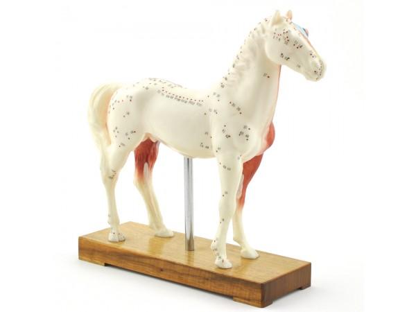 Acupunctuur Model Paard