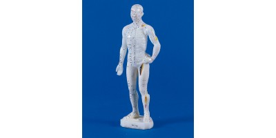 Mannelijk Acupunctuur Model Klein