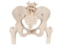Bekkenskelet vrouw met dijbeenhoofden