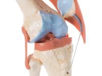 Deluxe functioneel kniegewricht
