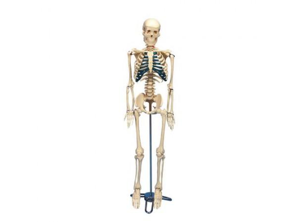 Desktop Mini Skelet