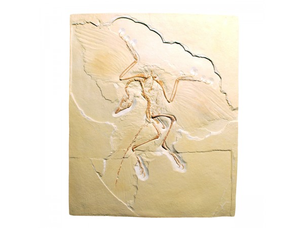 Replica Archaeopteryx Lithographica