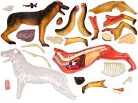4D Anatomie Hond, 29-delig, 17cm