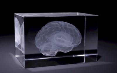 Anatomie 3D Laser Glasblokken