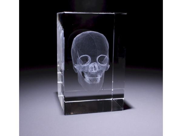 Anatomie Glasblok Schedel